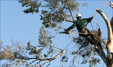 pruning and tree maintenance