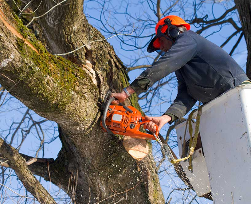 Concord tree care specialist removes a branch with a chainsaw