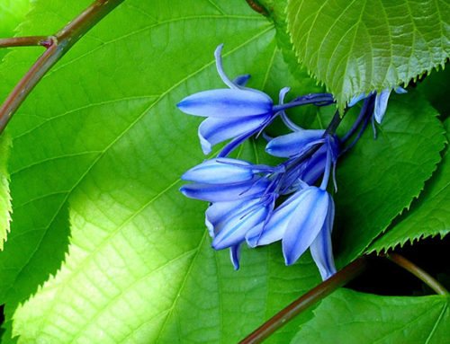 Our Favorite Plants that Like Shade