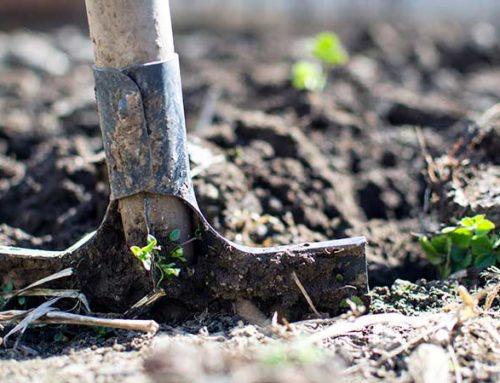 The 6 Types of Soil for Plants & How to Choose