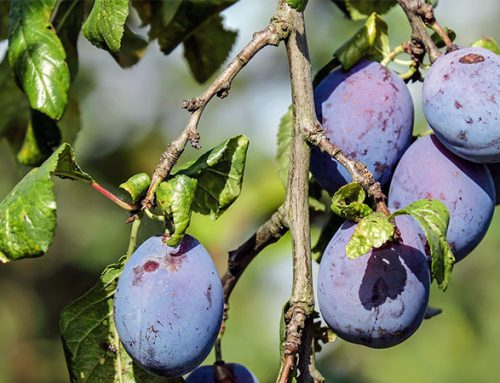 Growing Fruit Trees: Are You Ready For It?